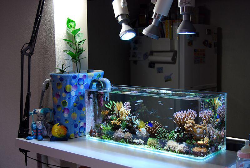 Nano de fantasia 25 litros reef ideas acuario de for Peces marinos para acuarios pequenos