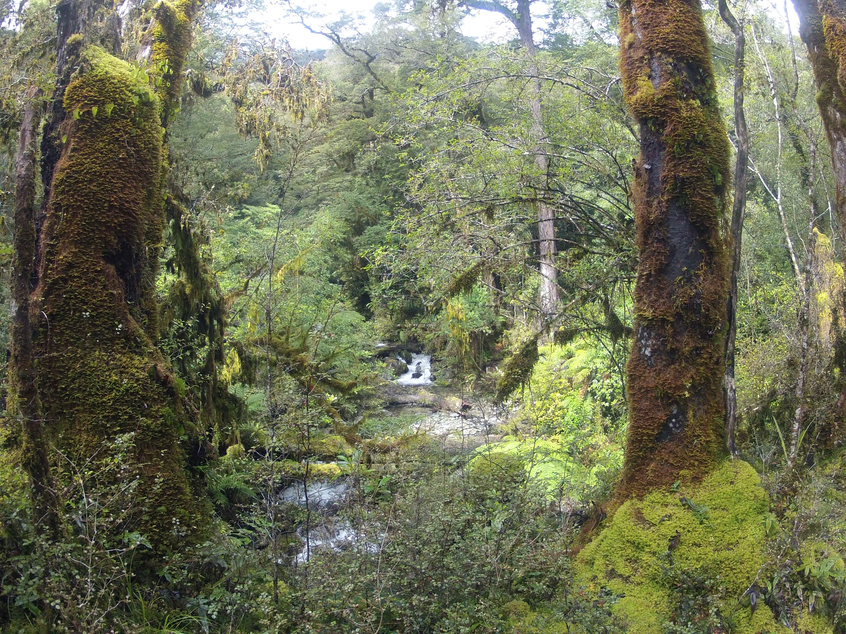Greens of forest in Hollyford Valley, Fiordland National Park, NZ
