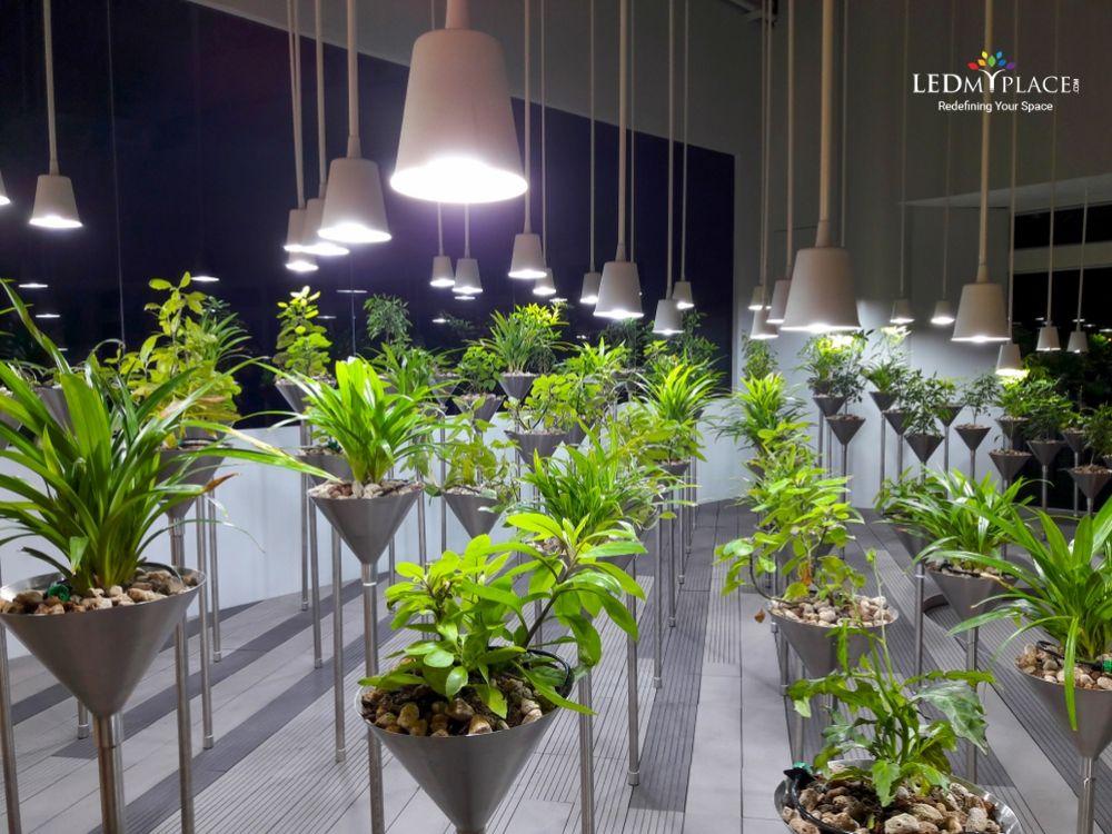 Plant Grow With Led Light Led Bulb Led Lights Led Light Bulbs
