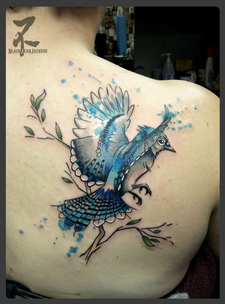Birds Jay Bluejay Bluebird Geai Flying Perching Colortattoo