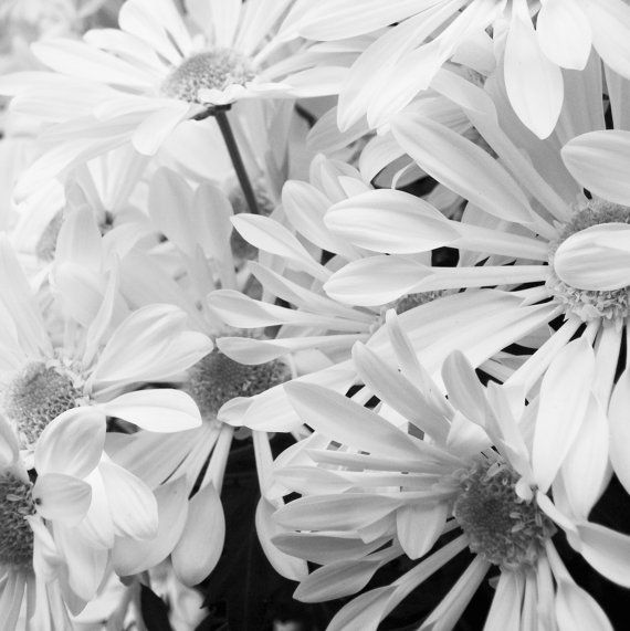 Square black and white art print daisy grey vintage by viesereine items similar to square black and white art print daisy grey vintage style photography original dreamy blue white daisy floral print minimalist on etsy mightylinksfo Image collections