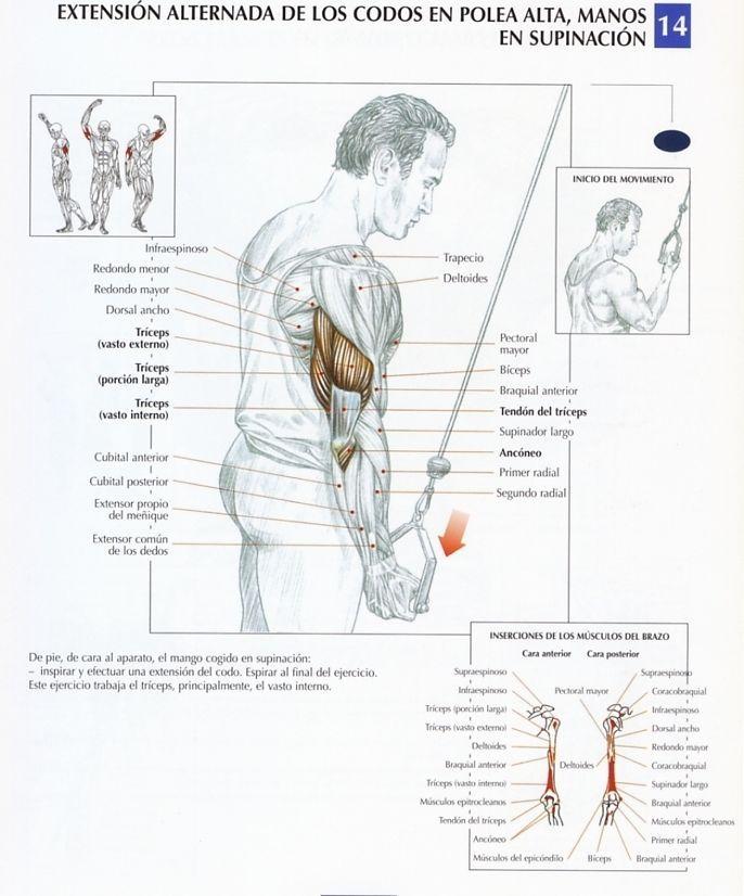 Los 10 mejores ejercicios para triceps