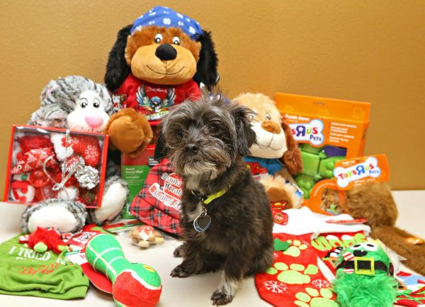 Pet shopping: Don't forget your four-legged friends this Christmas