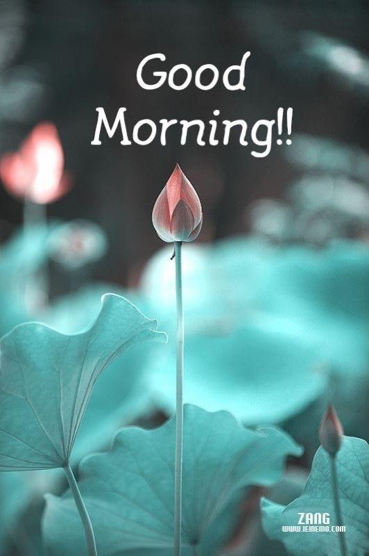 Good Morning Good Morning Good Morning Flowers Good Morning