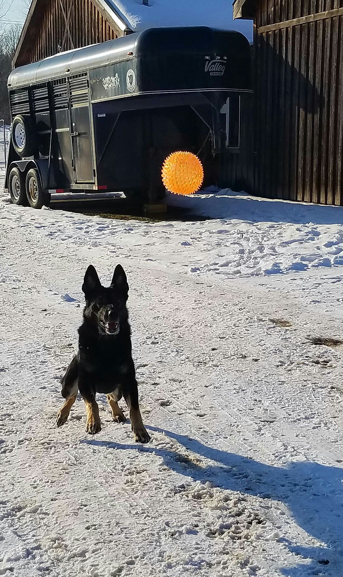 German Shepherd Dog dog for Adoption in Buffalo, NY. ADN