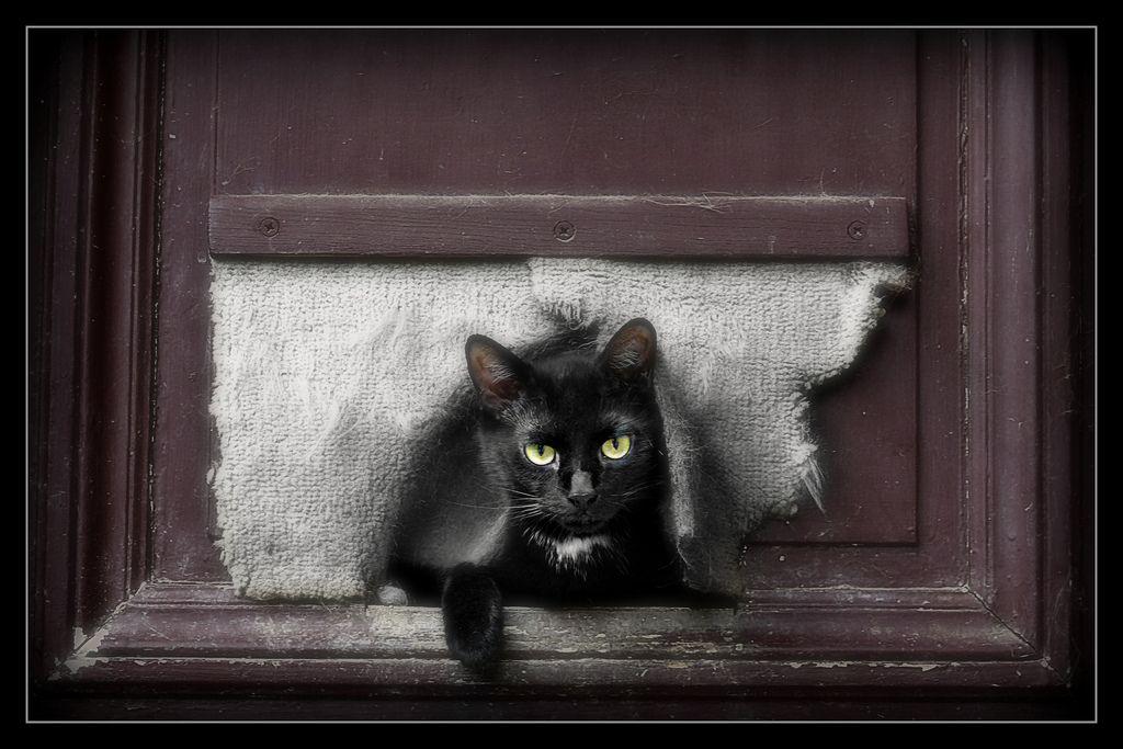 854 Black Cat 2 | Flickr - Photo Sharing!