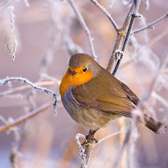 зимний лес фото, природа, деревья картинки видео (с ...