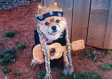 Best Dog Costumes Dog Facts Best Dog Costumes Animal Antics