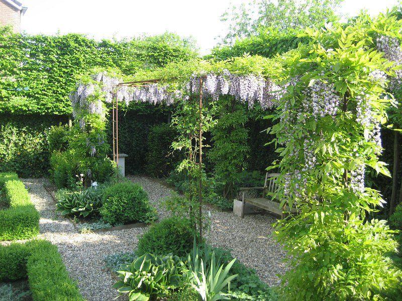 Blauwe druif en pergola garten gärten gartenideen