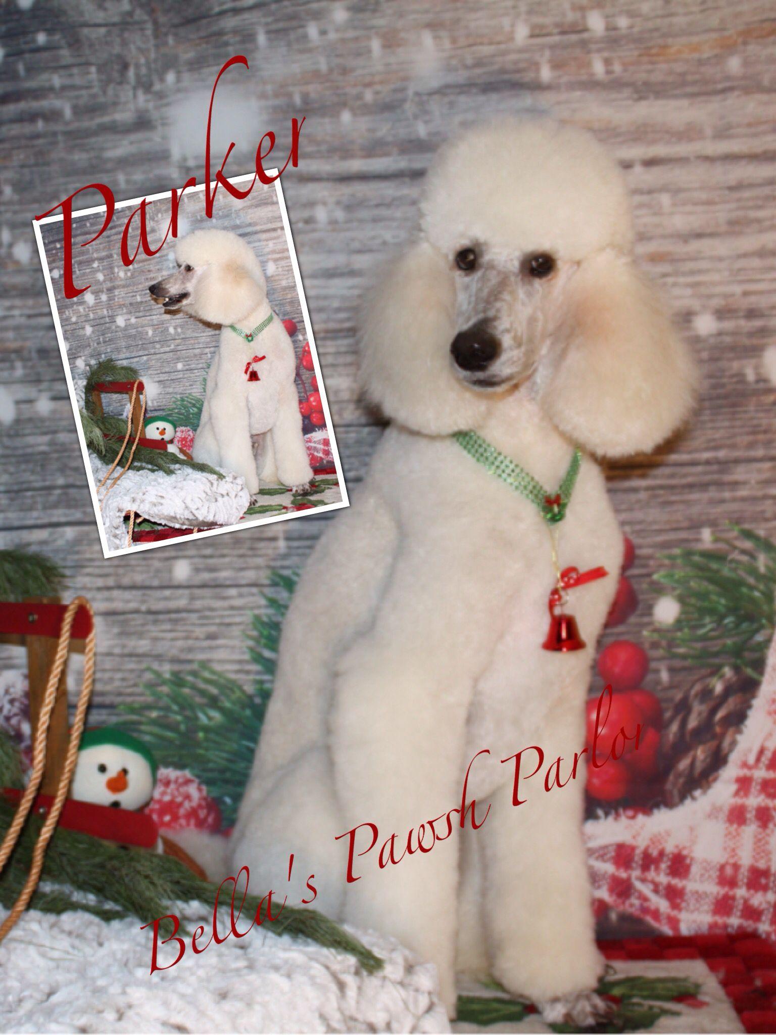 Bella S Pawsh Parlor Christmas Ornaments Holiday Decor Novelty Christmas