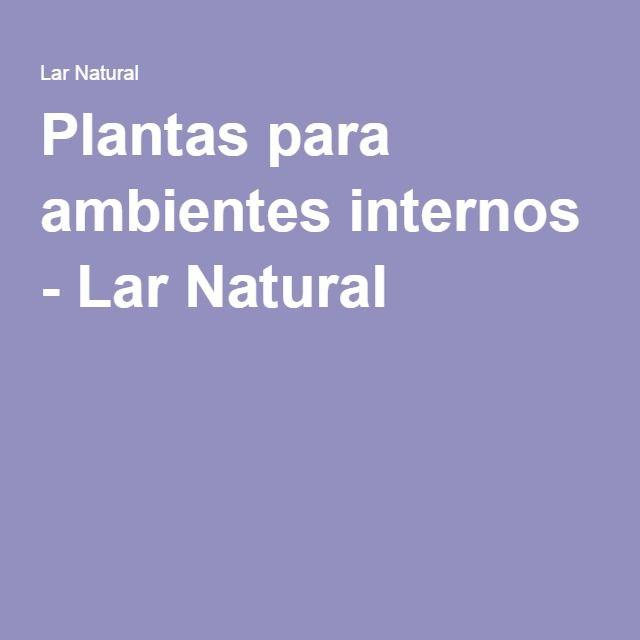Plantas para ambientes internos - Lar Natural