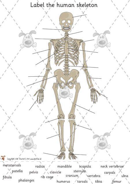Teachers Pet Activities Games Human Skeleton Labelling Hard