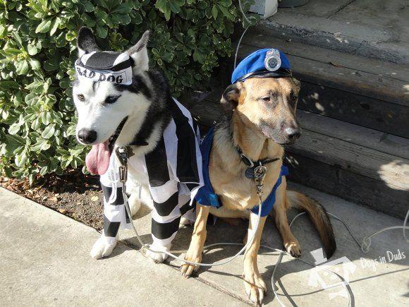 Pin By German Shepherd On German Shepherd Funny Police Dog