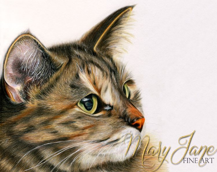 Kitty colored pencil drawing