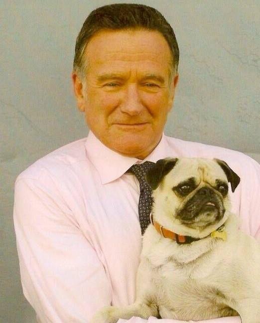 Robin And Leonard Pugs Celebrity Dogs