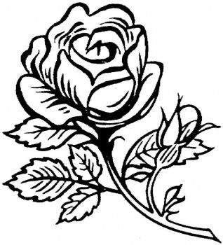 rose coloring pages for adults Free Coloring Pages for Adults | Beautiful big rose coloring page  rose coloring pages for adults
