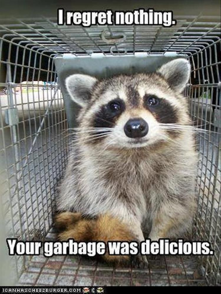 Funny Animal Pictures Of The Day 30 Pics Raccoon funny