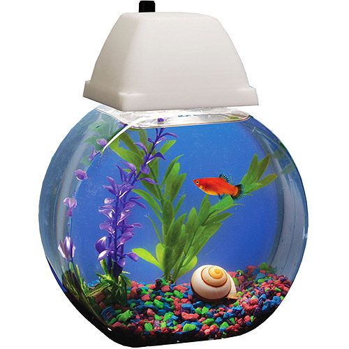 Hawkeye aqua bowl aquarium 1 gal with light hood 7 watt for How much are betta fish at walmart