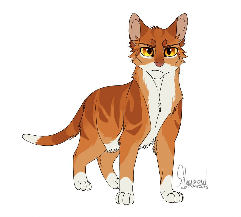 Thunder By Silverzoul On Deviantart With Images Warrior Cats