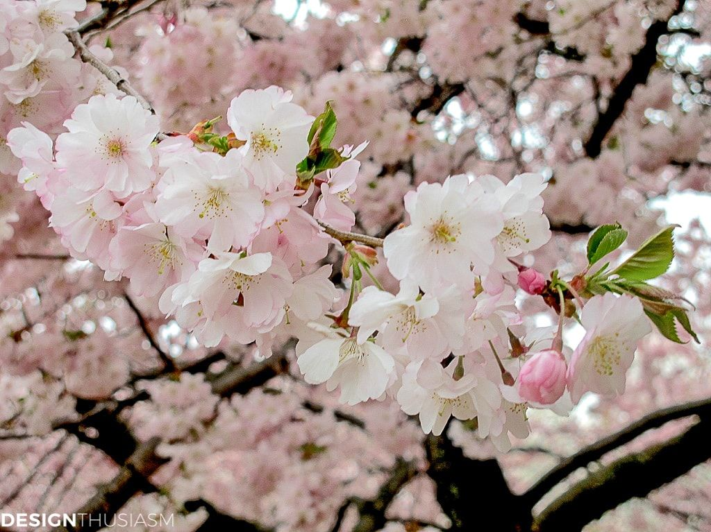Cherry Blossom Decor How These Branches Inspire Spring Table Settings Cherry Blossom Decor Spring Table Settings Blossom