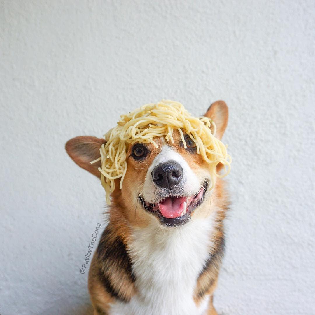 Dogs Dogs Instagram Posts Videos Stories On Webstaqram Com