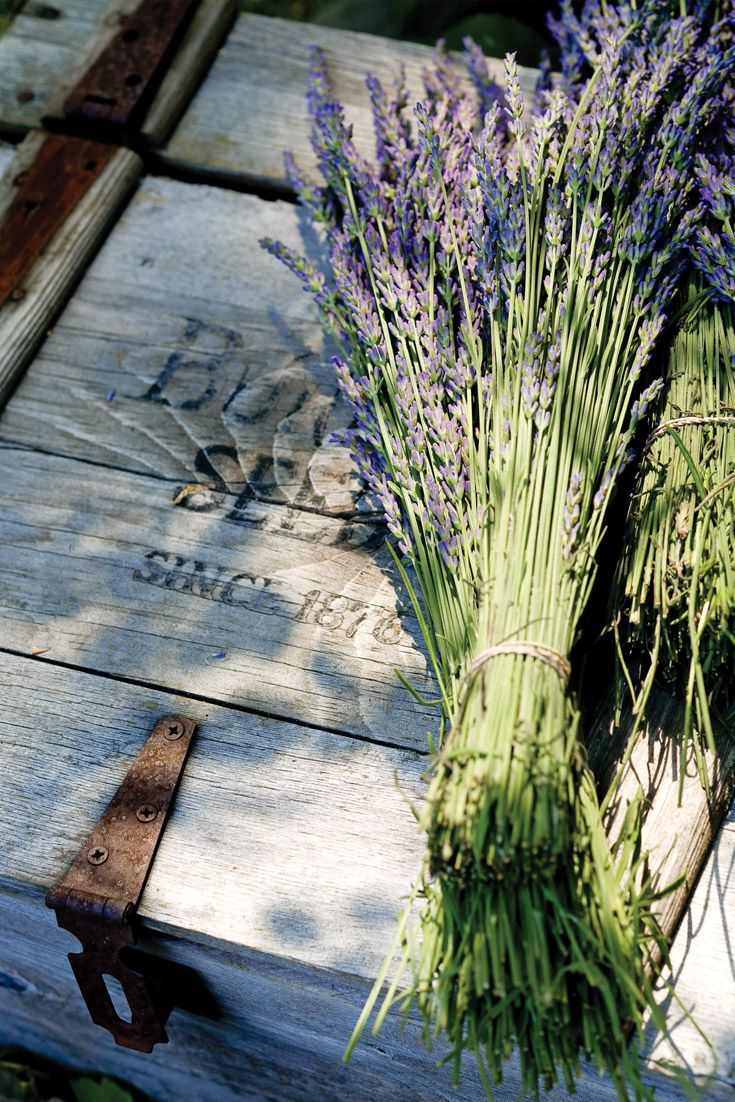 Purple Reign: Cape Cod Lavender Farm | French Country Charm
