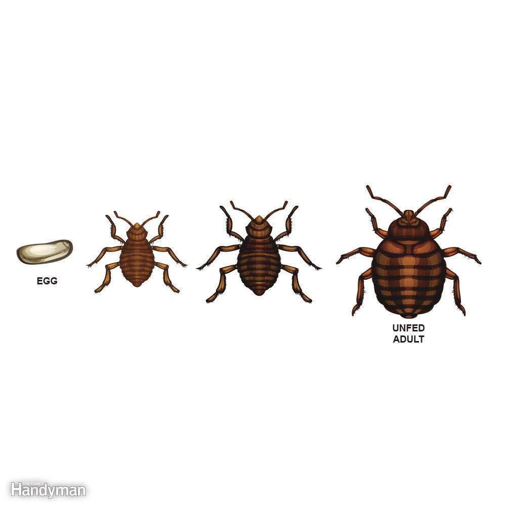 How To Get Rid Of Bed Bugs A Diy Guide With Images Rid Of Bed