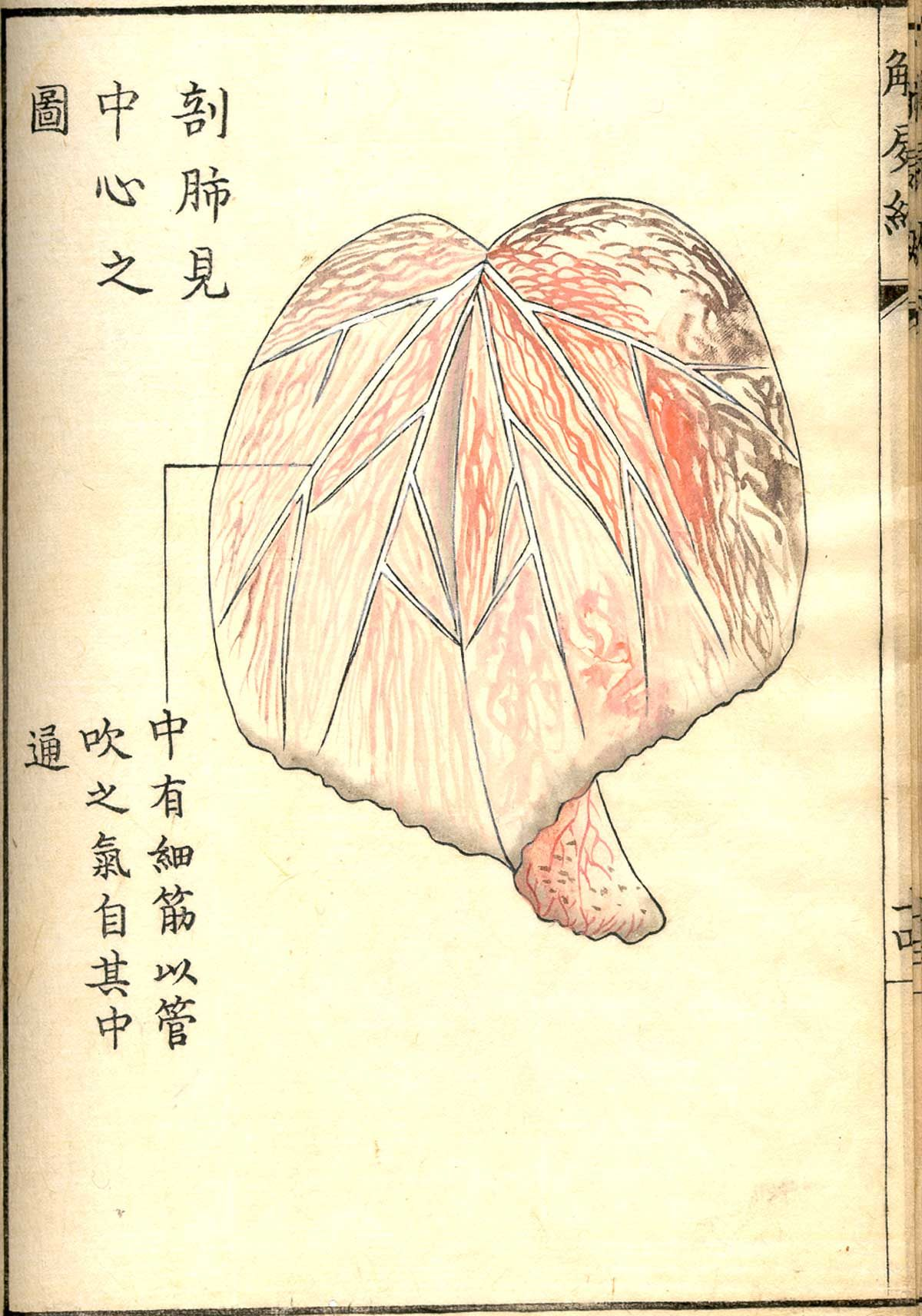 National Library of Medicine historical anatomy images | Medical ...