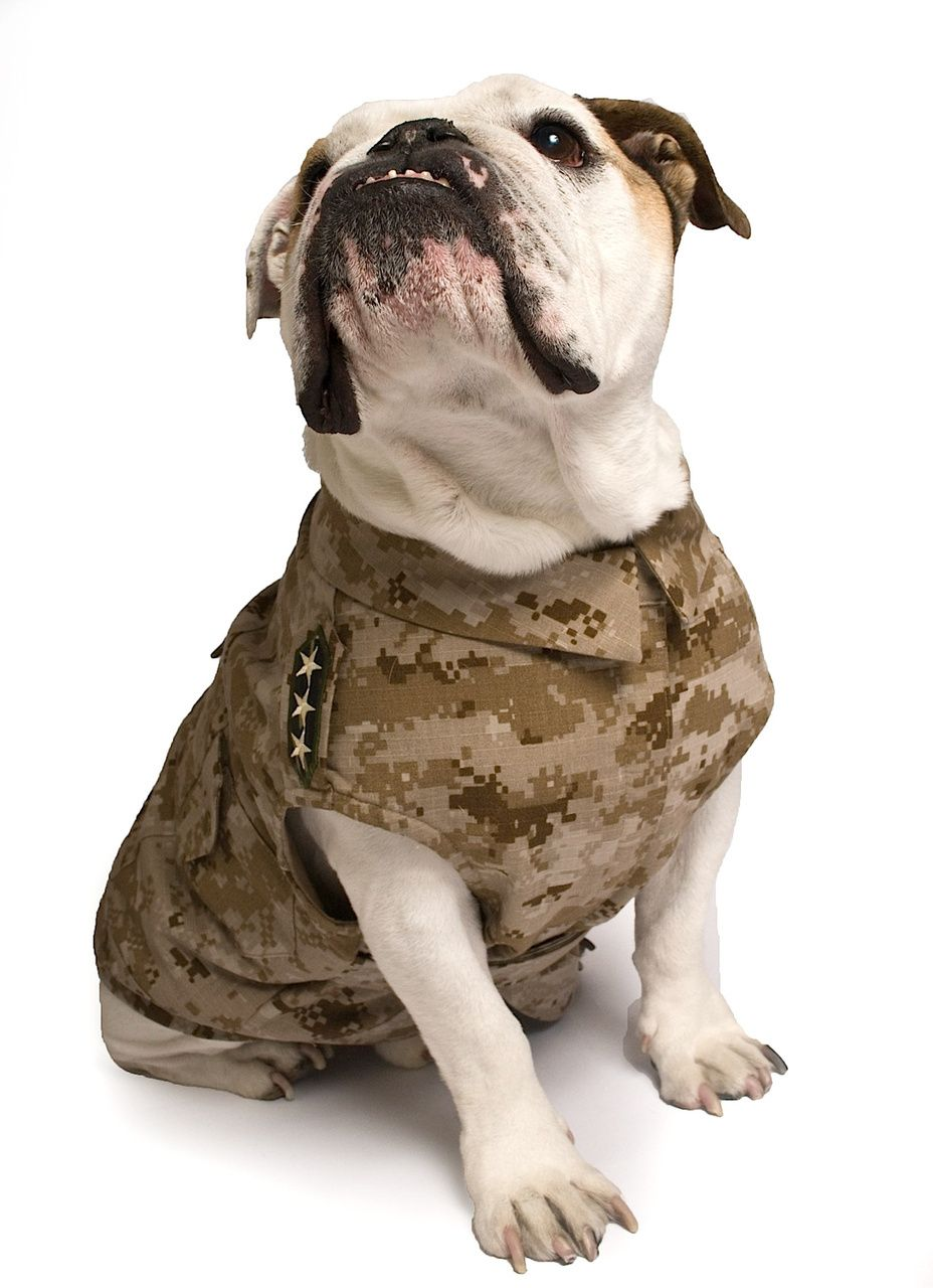 84fbddc22ae78 Cool Blue Dog Apparel - Digital Camouflage Military Jacket, $48.00 (http://