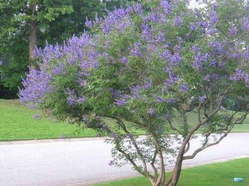 6 Small Trees For Small Yards   Small yard landscaping ...