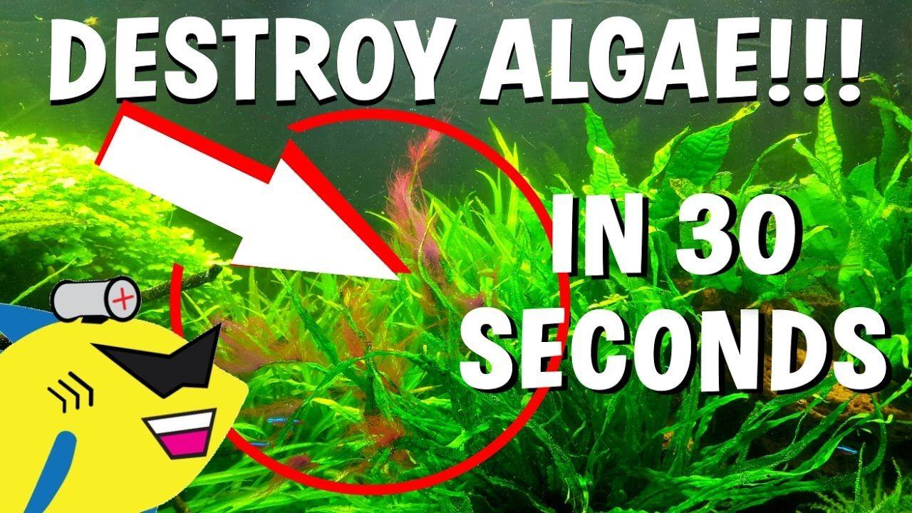 How to destroy algae in 30 seconds get rid of aquarium
