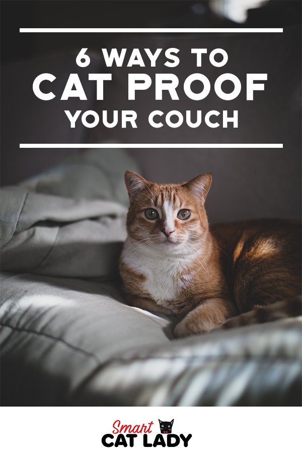 6 Ways To Cat Proof Your Couch In 2020 Cat Proofing Cats Cat Proof Couch