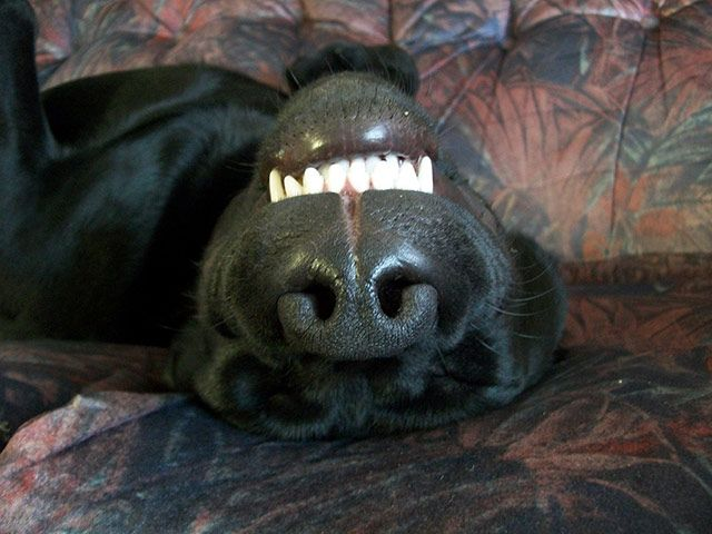 Top Pets Let Sleeping Dogs Lie Your Best Pictures Sleeping