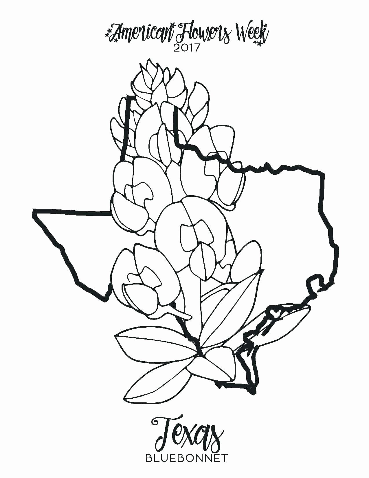 Minnesota State Flower Coloring Page Lovely Texas Map Coloring