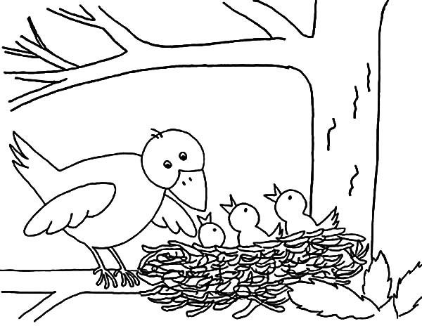 Baby Birds In Nest Coloring Pages Bird Nest Coloring Pages Bird