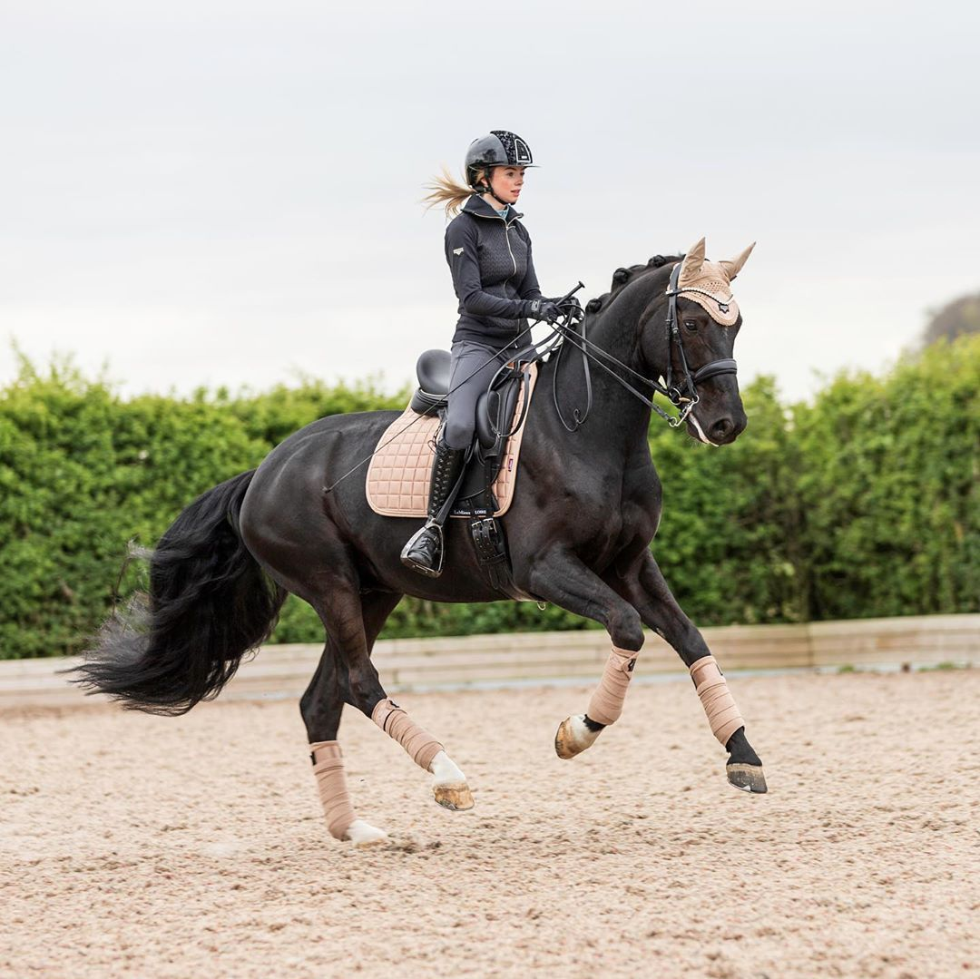 Elise Duke Salsa L 49k On Instagram Cantering In Champagne From Lemieuxproductsofficial Horses Dressage Horses Dressage Horses Photography