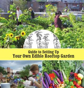 Setting Up Your Own Edible Rooftop Garden Book | Rooftop ...