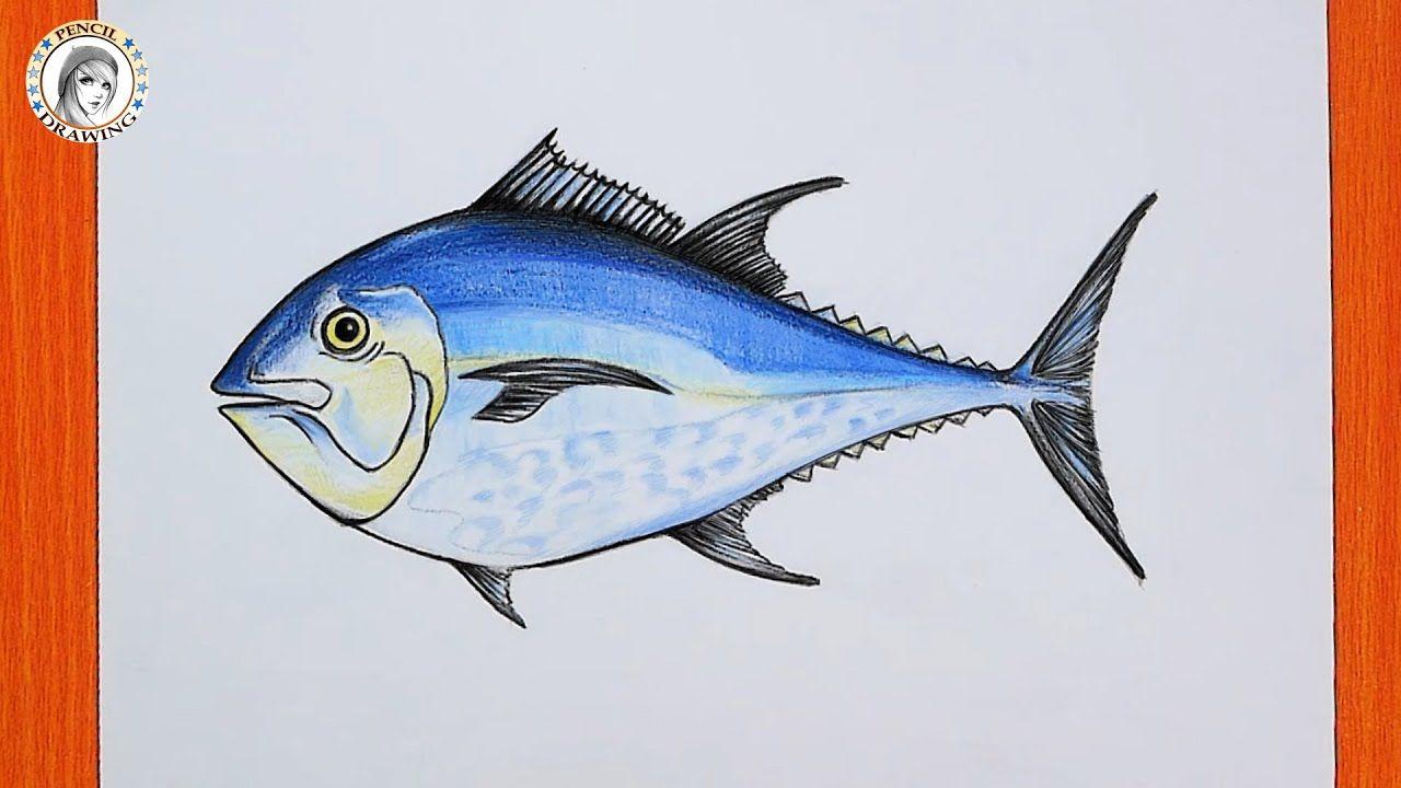 Drawing A Fish Tuna Fish رسم سمكة خطوات الرسم سمكة التونة In 2021 Pencil Drawings Drawing For Beginners Drawings