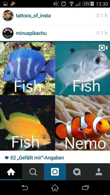 Drei Fische und Nemo