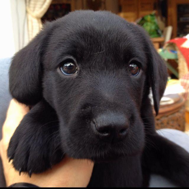 #Puppyhappy