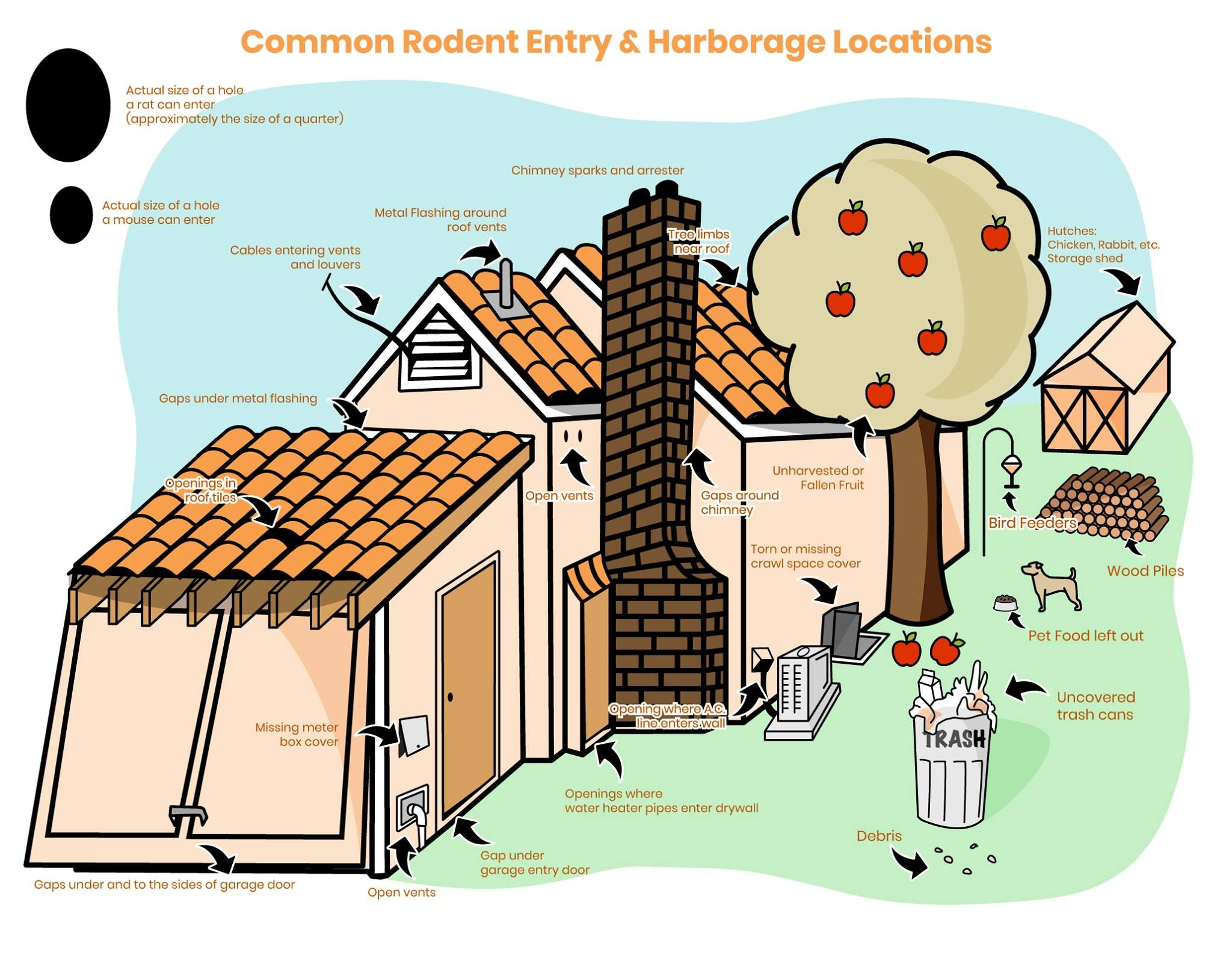 Find out the most common entry points rodents use to