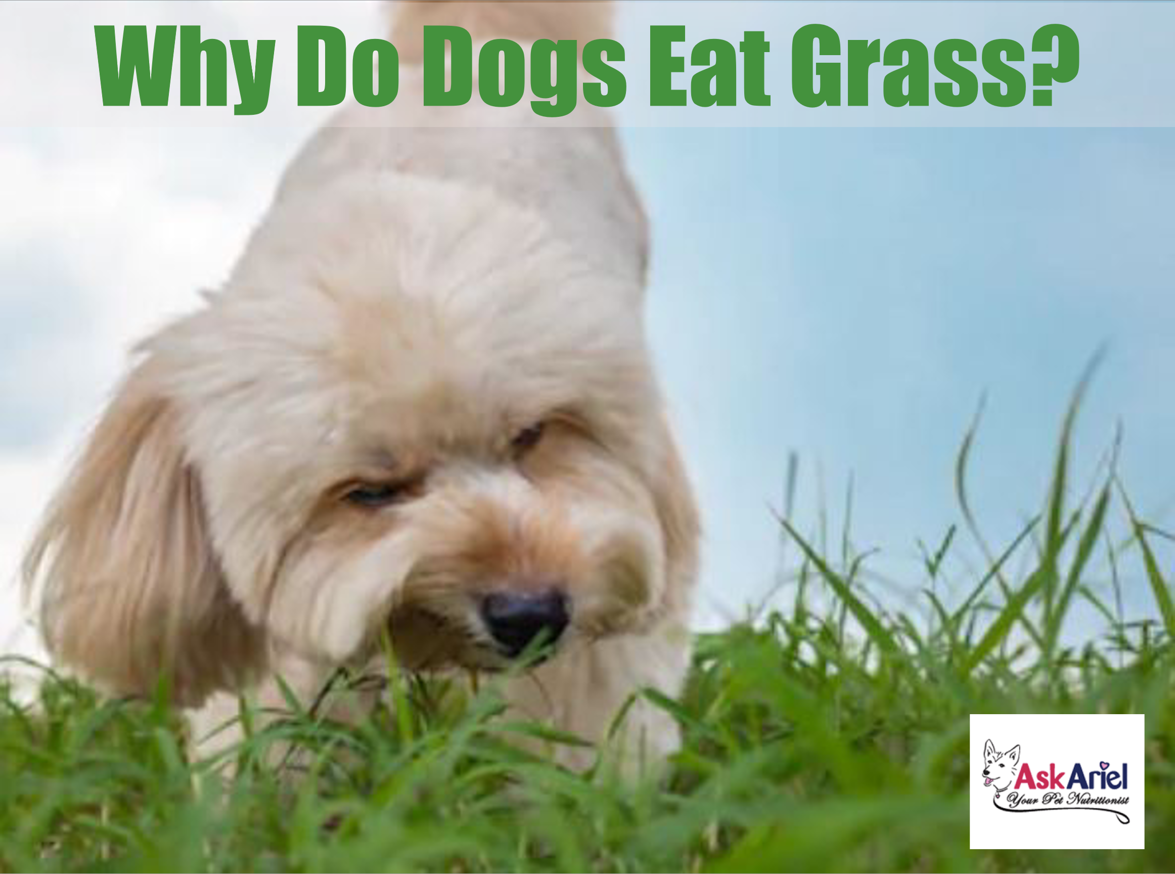 What Do I Feed A Dog With A Sensitive Stomach