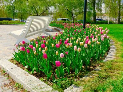 Oh, what the color splendor of the Koivupuisto Park in Vaasa, Finland