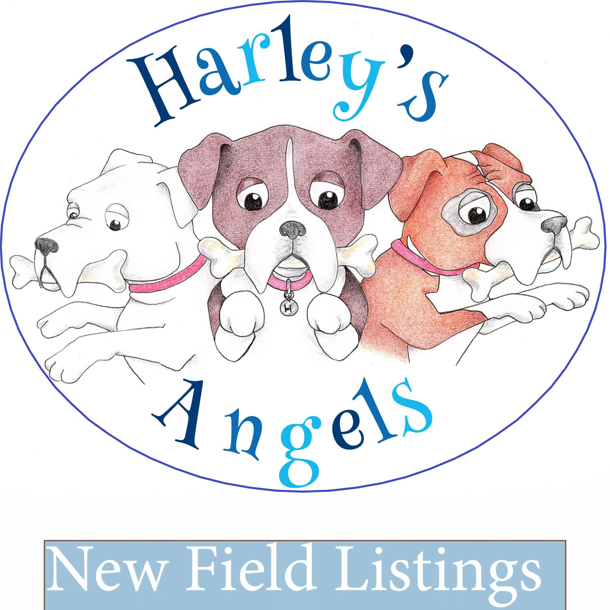 Harley S Angels Dog Park Greenhead Holding Stevenston North Ayrshire Ka20 4la Harley S Angels Is A Secure Dog Park Wher Dog Play Area Dog Walking Dog Park