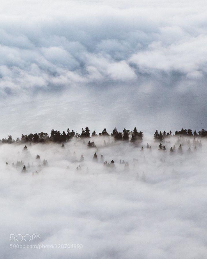 Trees in heaven by forrestmankins