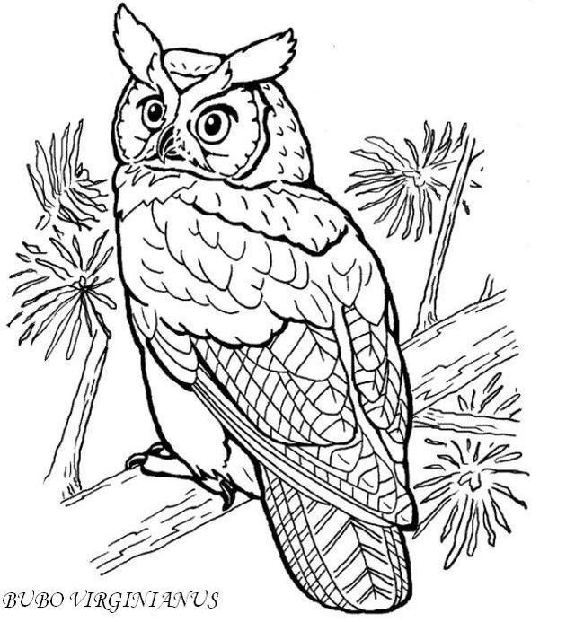 Madarak Es Fak Napja Owl Coloring Pages Animal Coloring Pages