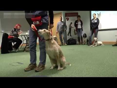 pet training behavior