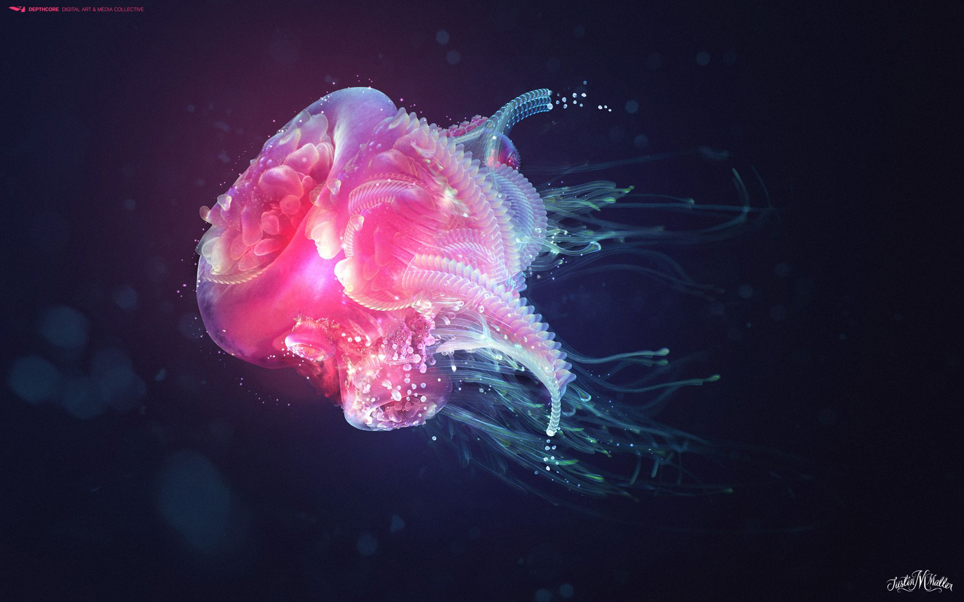 Jellyfish iphone wallpaper tumblr - Jellyfish Images