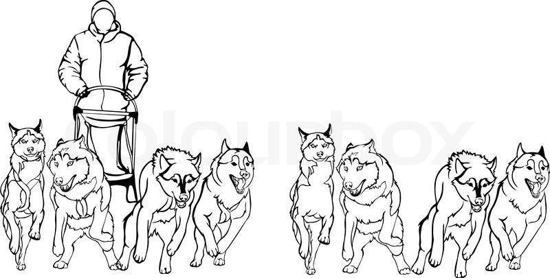 9521629 Team Of Sled Dogs Black White Version Jpg 800 405 Dog Sledding Dog Coloring Page Horse Coloring Pages