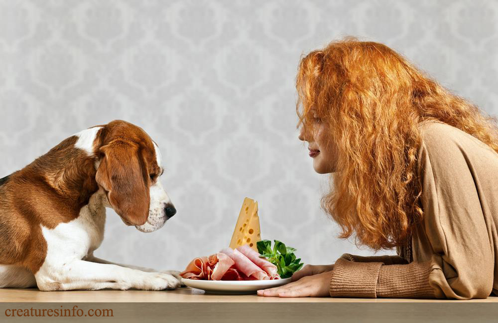 Is pork bad for Dogs? YES or NO Food animals, Healthy